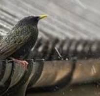 Как избавиться от воробьев под крышей дома
